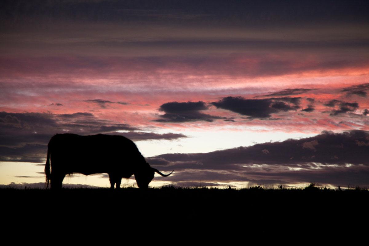 Beastie at sunset